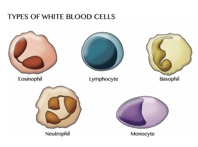 Immunsupprimierte Patienten in der Onkologie